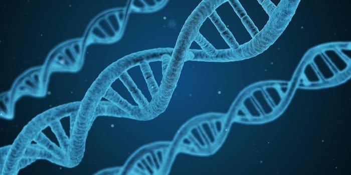 染色体細胞